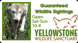 Yellowstone Wildlife Sanctuary
